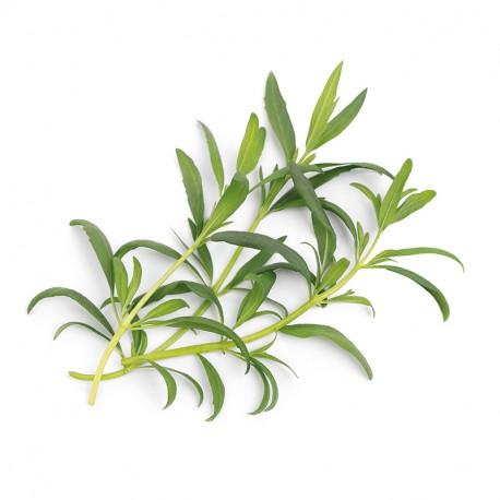 Hyssop Organic Veritable Lingot Click & Grow Smart Garden Herbs Herb Grow light self watering planter indoor LED
