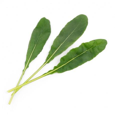Mibuna Organic Veritable Lingot Click & Grow Smart Garden Herbs Herb Grow light self watering planter indoor LED
