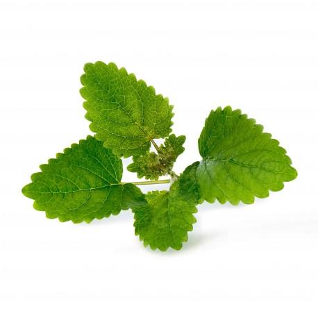 Lemon Balm Organic Veritable Lingot Click & Grow Smart Garden Herbs Herb Grow light self watering planter indoor LED
