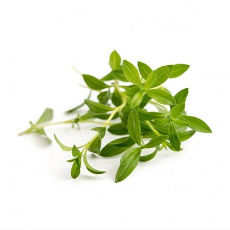 Savory Organic Veritable Lingot Click & Grow Smart Garden Herbs Herb Grow light self watering planter indoor LED